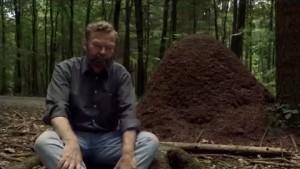 L'Organisation secrète des fourmis