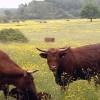 Veaux, vaches, cochons ...