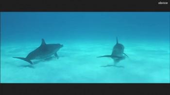 Atlantis | Luc Besson
